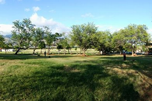 bark park honolulu dog parks in waikiki honolulu oahu dog parks