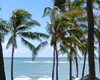 pet friendly hotel in waikiki, dogs allowed hotels in honolulu, oahu hawaii dog friendly hotels